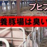 養豚場飼育員の臭い仕事内容と安い年収がヤバいww