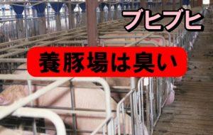 養豚場の仕事